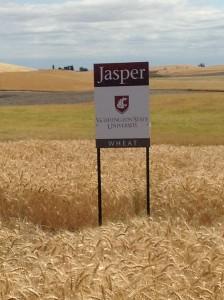 jasper-field-2