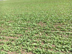seedingrate