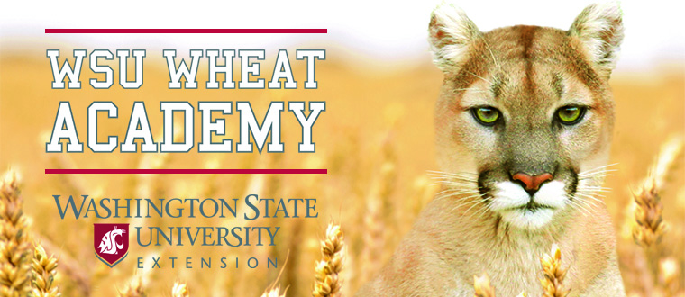 """Washington State University Extension"" and ""WSU Wheat Academy"" over a photo of a cougar in a wheat field"