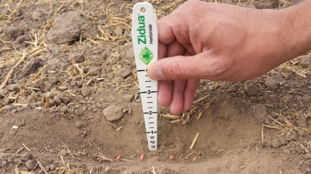 Measuring soil depth with a Zidua ruler.