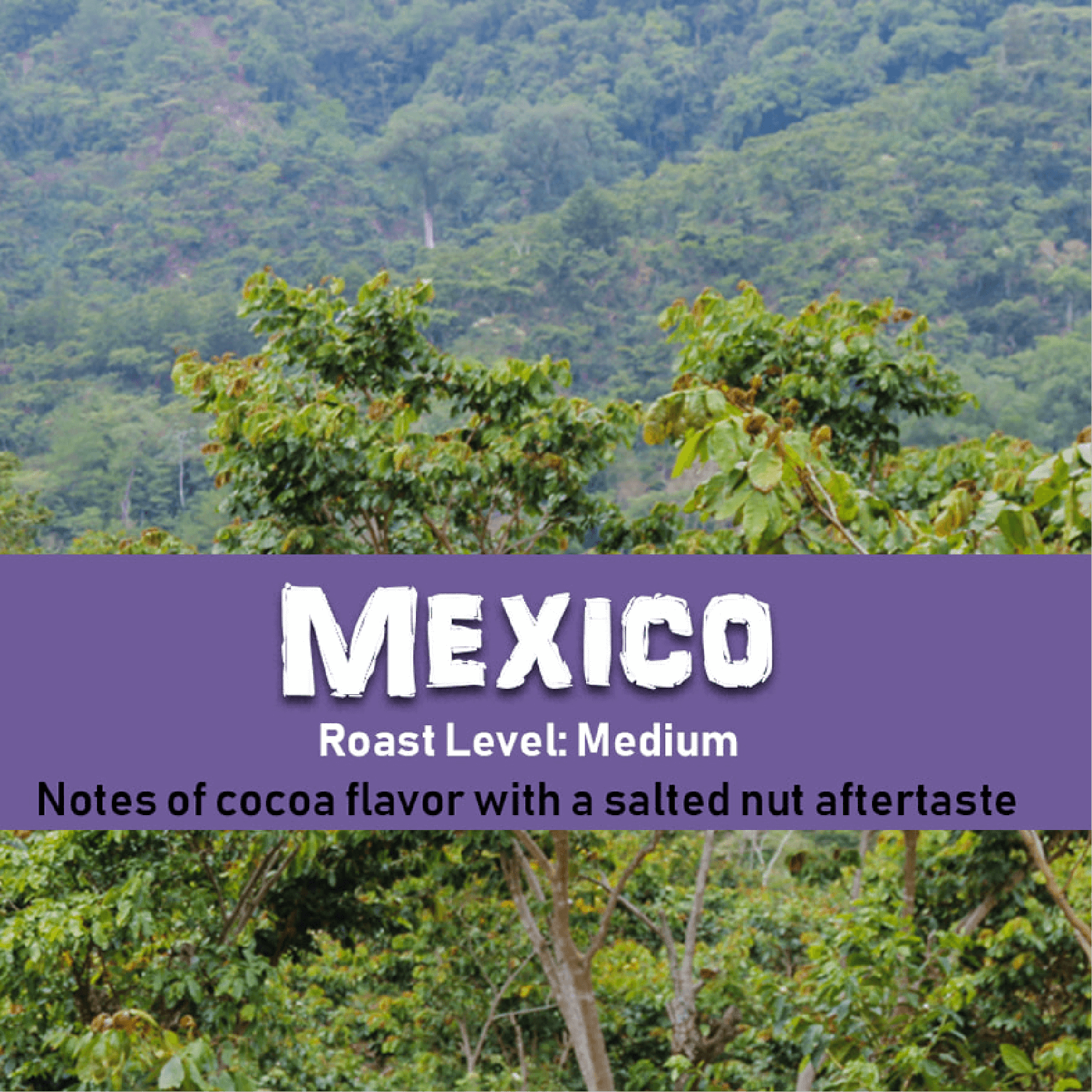Mexico (Washed) from Malone Specialty Coffee