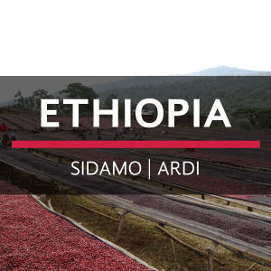 Ethiopia | Sidamo - Ardi from Eiland Coffee Roasters
