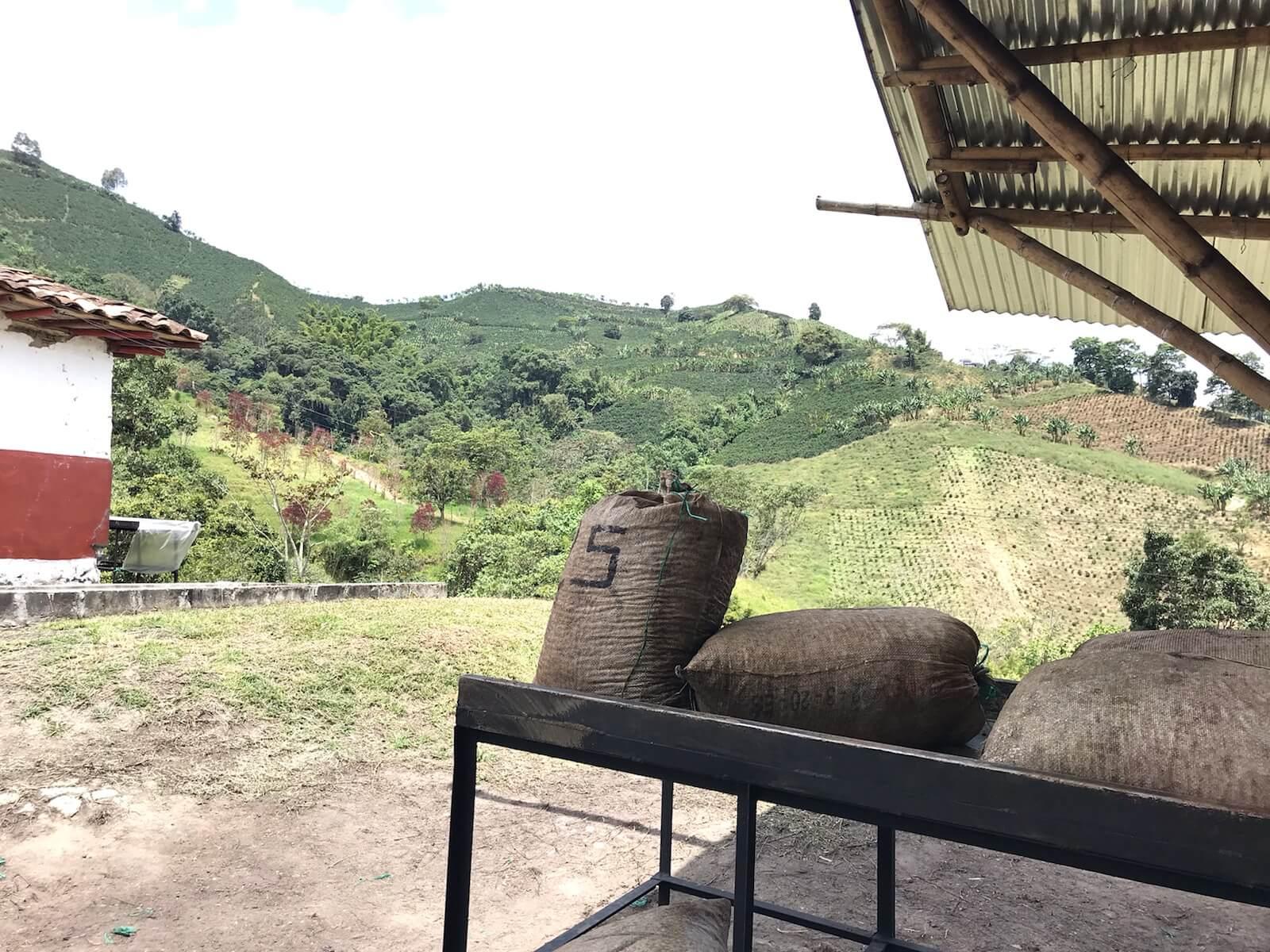 Finca Villa Ines from Purefi Coffee Roasters