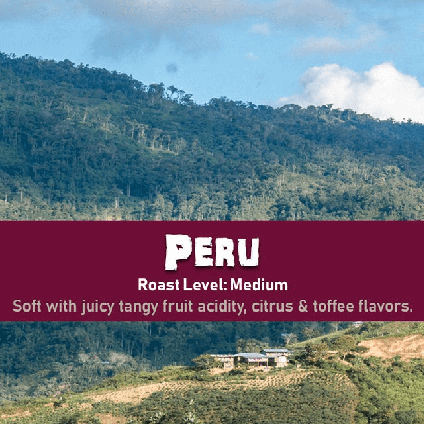 Peru (Washed) from Malone Specialty Coffee