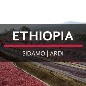 Ethiopia | Sidamo - Ardi from Eiland Coffee Roasters