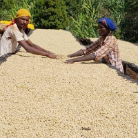 Halu Beriti - Gedeb, Yirgacheffe, Ethiopia - Special Preparation from Memli Coffee Lab