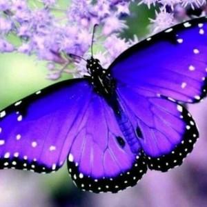butterfly1974