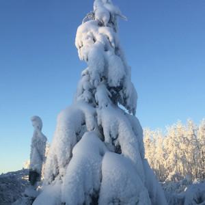 AlaskaChick