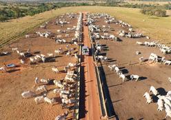Mercado da carne e a lucratividade nas fazendas serão debatidos durante 8º Simpósio de Pecuária de Mato Grosso