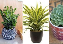 Plantas ajudam a incrementar a decoração e são benéficas à saúde dos moradores