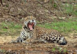 Safári Tour Pantanal