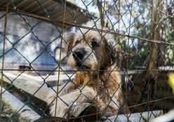 Bem Estar Animal faz o resgate de cães com denúncias de espancamento