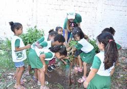 Alunos da rede pública participam de plantio de mudas do projeto Verde Novo