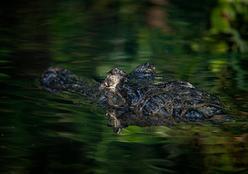 Sesc Pantanal lança desafio e manifesto pela natureza no Dia do Meio Ambiente