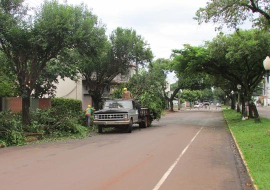 Semma abre inscrições gratuitas para curso de poda e arborização urbana