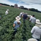 Classe produtora de norte a sul de Mato Grosso participa do Fundação MT em Campo