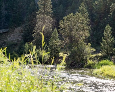 Fly Fishing In Eleven Mile Canyon South Platte Fly Shop