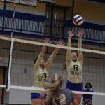 lady wildcat volleyball players hitting ball