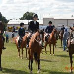 Novi Equestrian Season comes to an end