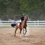 Novi Equestrian Meet #3 September 16th