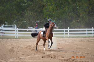 Novi Equestrian Meet #3 September 16th
