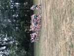 Girl Tiger Cubs Place 3rd at County Cross Country Championship