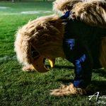 The mascot is doing push ups.