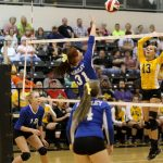 Volleyball set to take on Bears