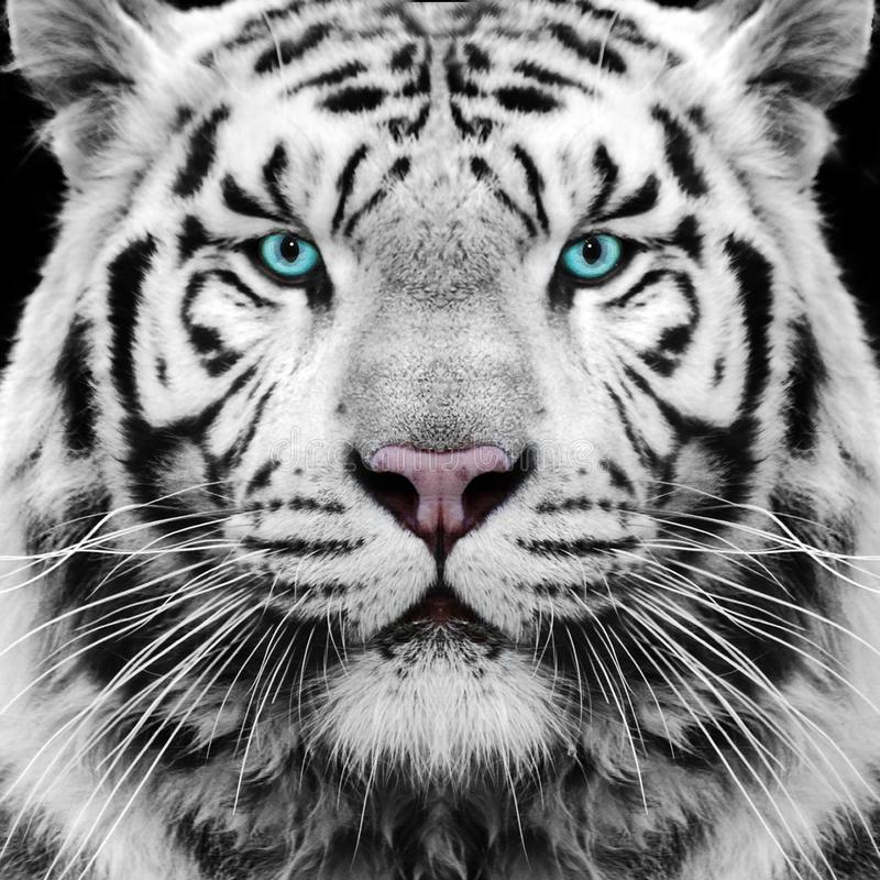 2017 WHITE TIGER AWARD