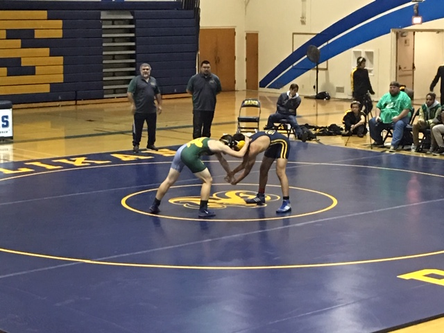 Ram Wrestling Takes Down Poly