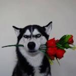 Happy Valentine's Day Husky Nation!