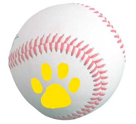 Baseball Camps Coming Up Soon