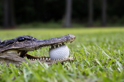 Men's Golf Tryouts, Open Play Announced