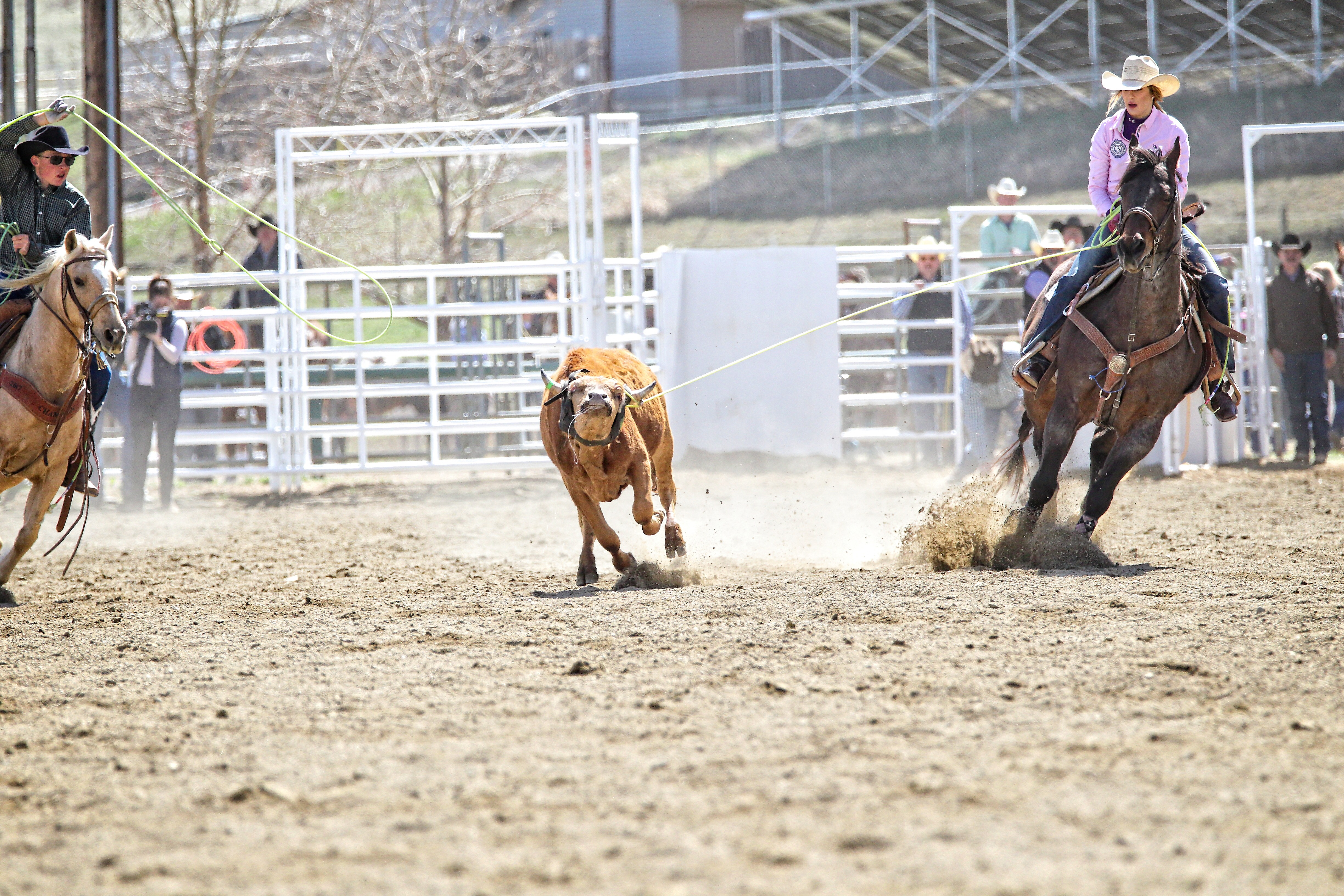 Grace Hill: Lassoing Her Dreams Through Rodeo