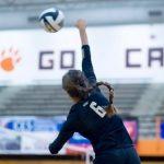 Hornet Volleyball Flies Past the Hawks