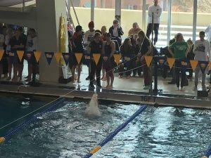 WPIAL Swimming Championships- Day 2