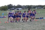 Tem-Cat Cross Country results from the Kiwanis Meet