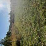 Indians run at Chenoweth Trail