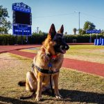 Chandler therapy dog, Jax, part of the pack