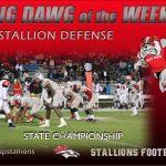 Stallion Defense Big Dawgs of the Week
