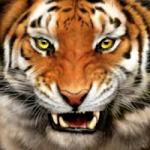 Tonasket Tigers
