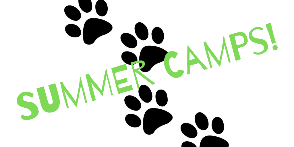 Summer Camps