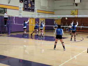 Volleyball At Newman