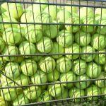 Boys tennis against New Prairie