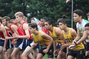 Photo Gallery: Cross Country Regionals