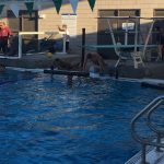 Boys Water Polo Tryouts 2017
