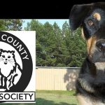 Volleyball Team to Support Marshall County Humane Society