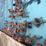 Boys Junior Varsity Swimming beats Imperial 50 – 0