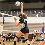 Volleyball Downs Williamston