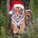 HAPPY HOLIDAYS TIGER NATION!